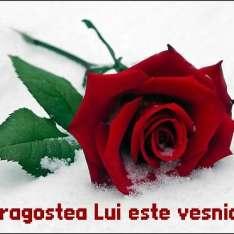 rose__(1)